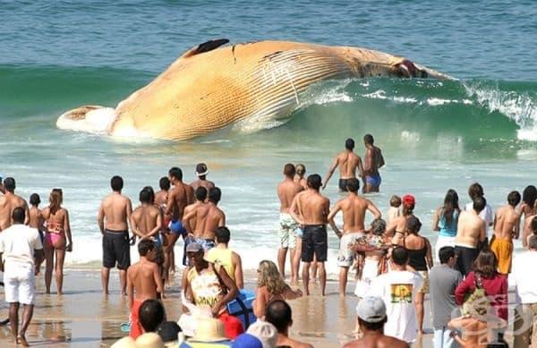Кит на плажа.