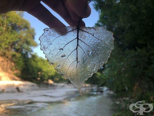 """Открих прозрачно листо в реката."""