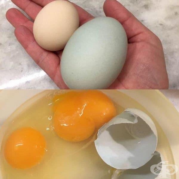 Две яйца - три жълтъка.