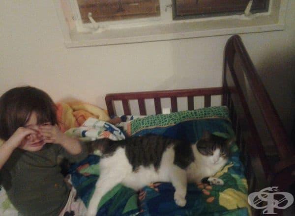 """""""За втора сутрин моята 3-годишна дъщеря се събужда  и плаче, защото котката е откраднала възглавницата й."""""""