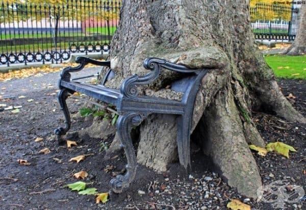 Пейка, вградена в дърво, Дъблин, Ирландия.