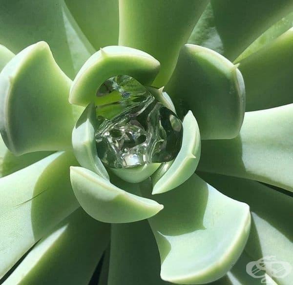 """""""Начинът, по който водата се застопори в растението ми""""."""