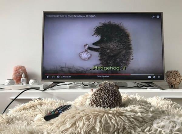 Рик обича да гледа анимационни предавания с таралежи.