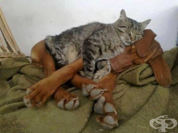 """""""Този килим е хубав."""", мисли си котката."""