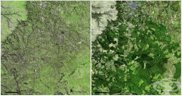 Уругвайски гори (март 1975 - февруари 2009). Гористата местност на Уругвай е   успяла да нарасне от 45 000 хектара до 900 000 хектара. Това води до загуба на   растително и животинско разнообразие.