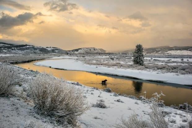 Лос преминава река Бъфало близо до Grand Teton.