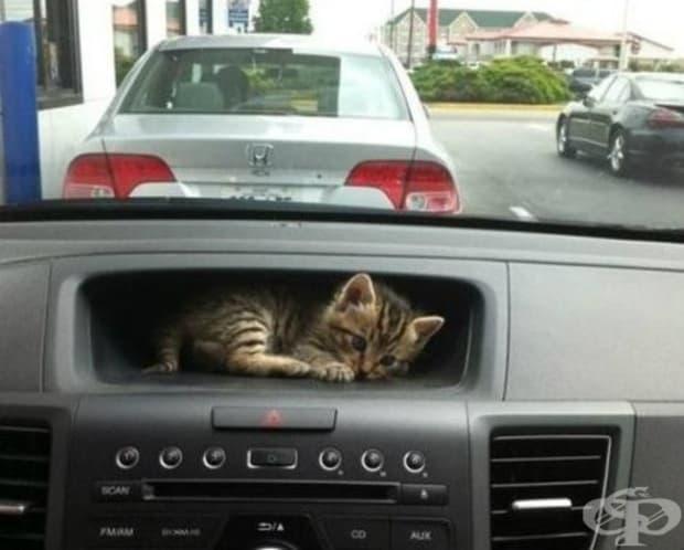 В колата под ръка.