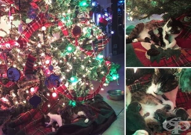 Котката ми току що роди под нашето коледно дръвче.