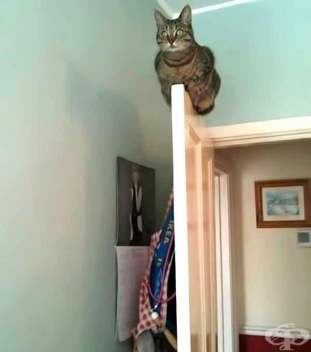 Прекарах 2 часа в търсене на котка си.