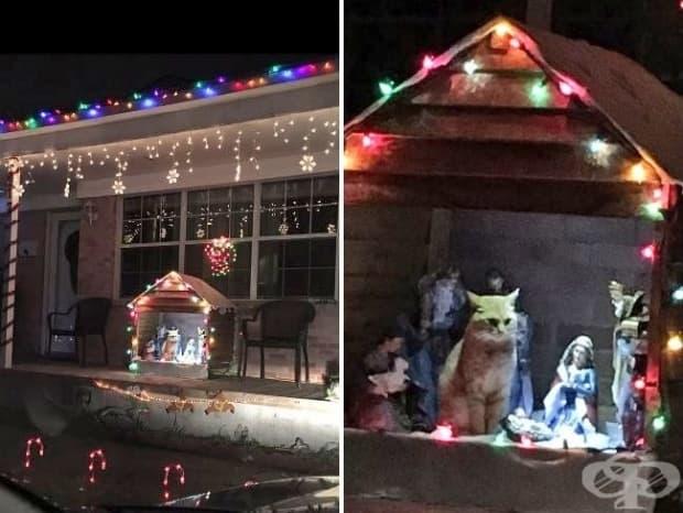 Родителите ми поставиха Рождествена сцена пред дома ни, но кажете ми защо моята котка си почива там, изглеждайки като Исус?