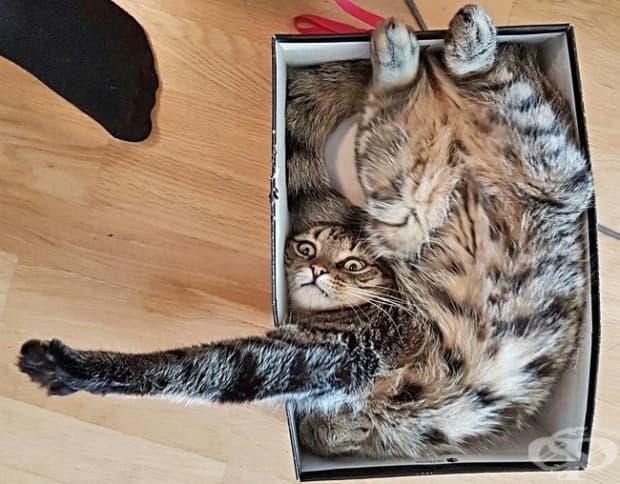 Намерете някой, който да ви гледа така както тази котка гледа собственика си.