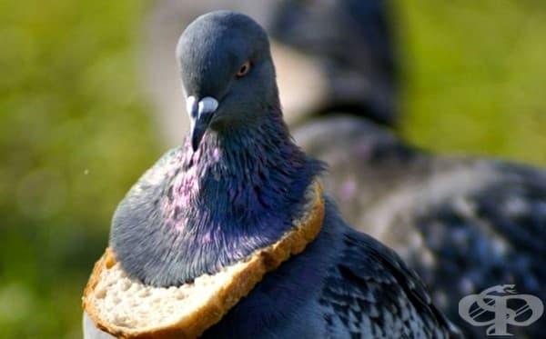 Горд носител на почетната награда – филия хляб