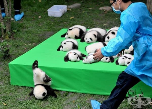 Цех за производство на панди