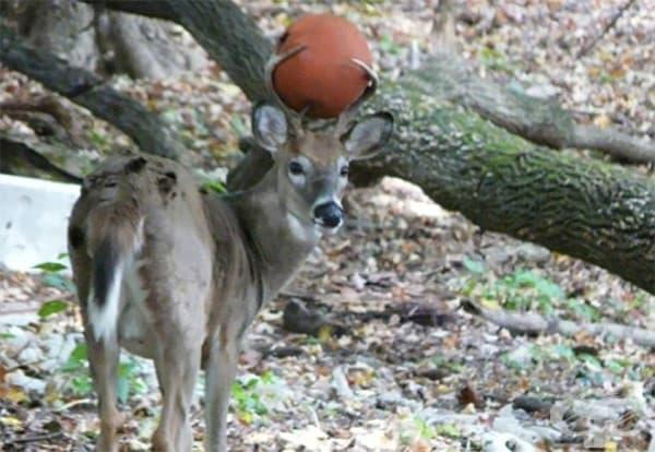 Каква топка?