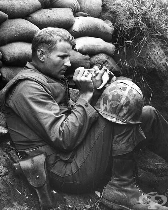 Американски войник храни коте по време на Корейската война, 1952 г.