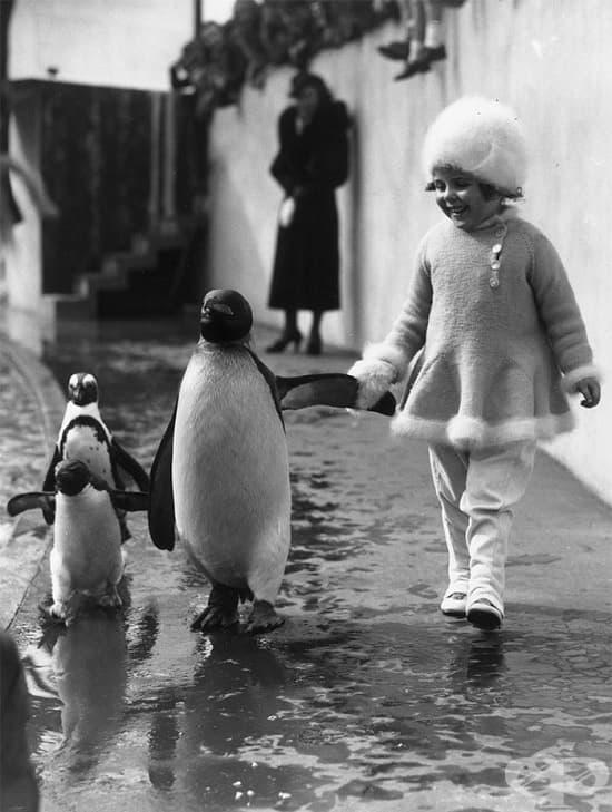 Разходка в Лондонския зоопарк, 1937 г.