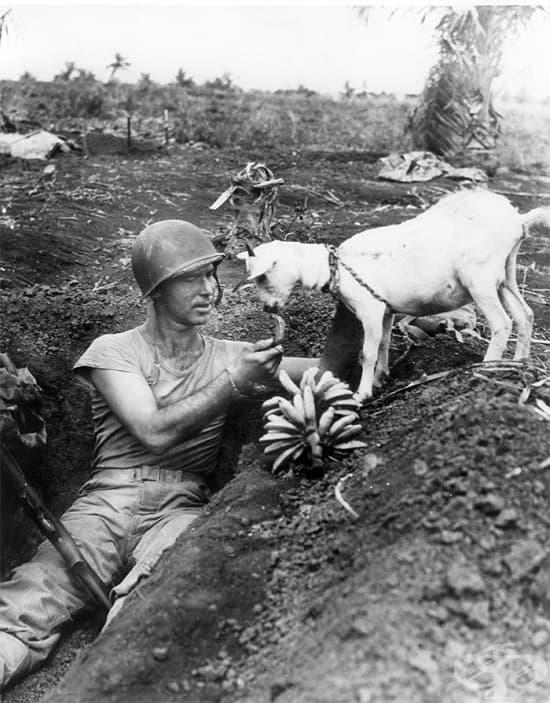 Войник храни козле през Втората световна война, 1944 г.