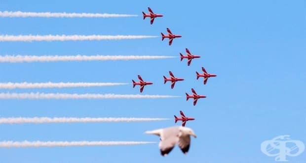 Фотобомба, създадена от една чайка по време на въздушно шоу в Уелс