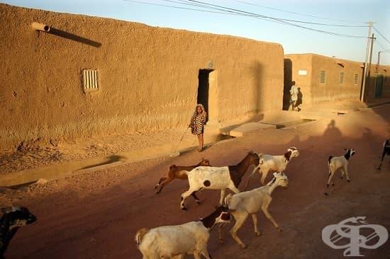 Джене, Мали