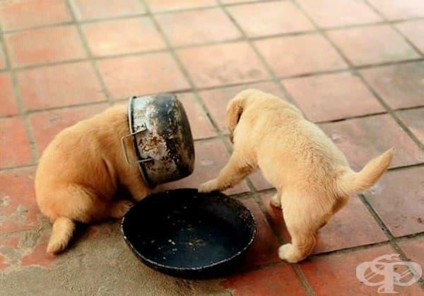 Няма пък, последната хапка си е моя!