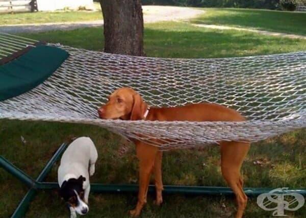 Тук трябва да има табела, че не е подходящо за кучета.