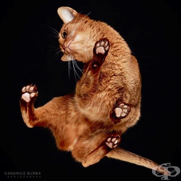 Котки, снимани от по-различен и много забавен ъгъл