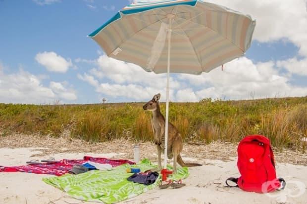 Слънчевите бани са нещо много характерно за кенгуратата.