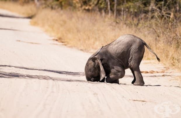 Никой ли не е казвал на това слонче да не си пъха хобота там, където не му е работата?