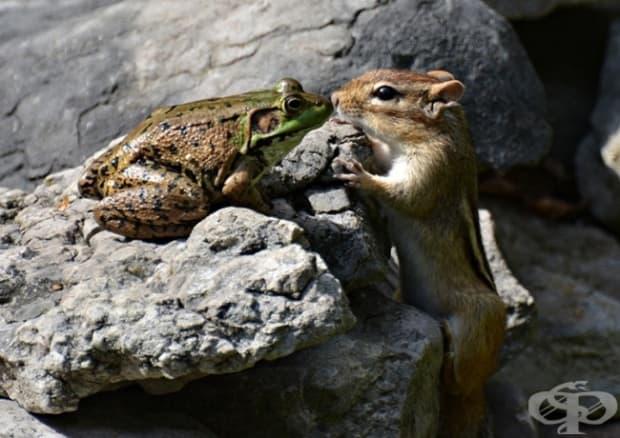 Никой не може да ни спре да бъдем заедно, любов моя жабешка!
