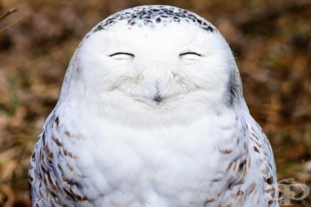 Тази снежнобяла сова обича живота!