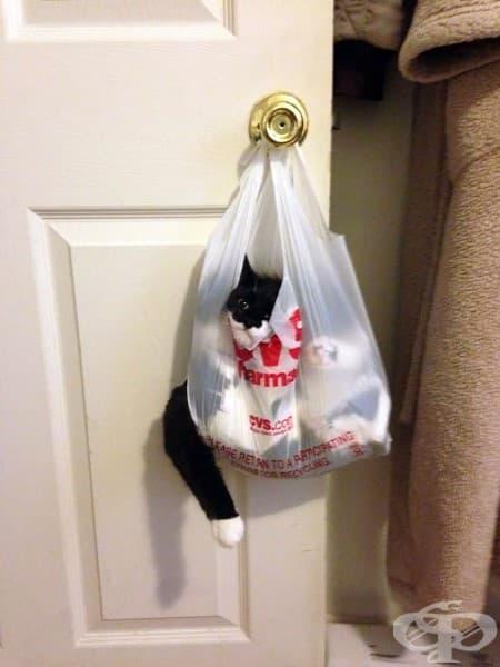 20 котки, които съжаляват за избора си