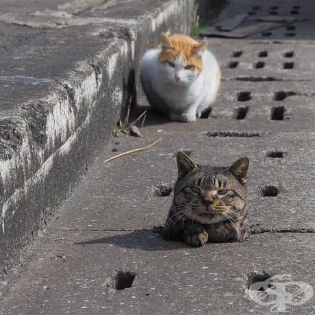 Тези бездомни котки се забавляват искрено с дупките на водосточните тръби