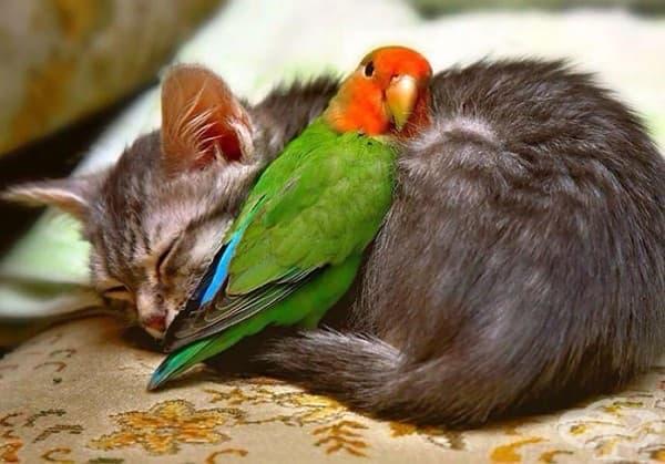Котка и папагалче
