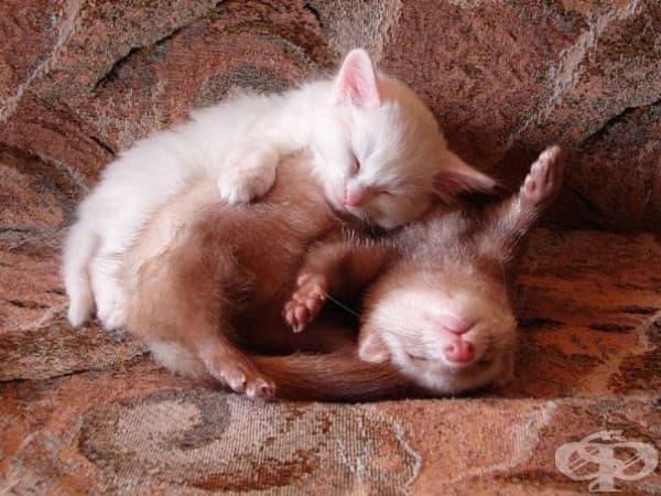 Коте и порче