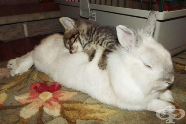 Коте и зайче