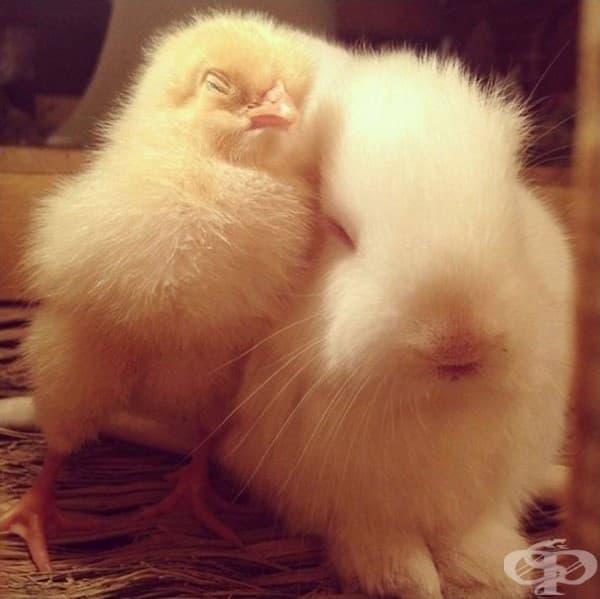 Пиленце и зайче