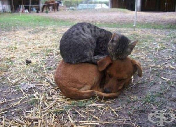 Куче и коте