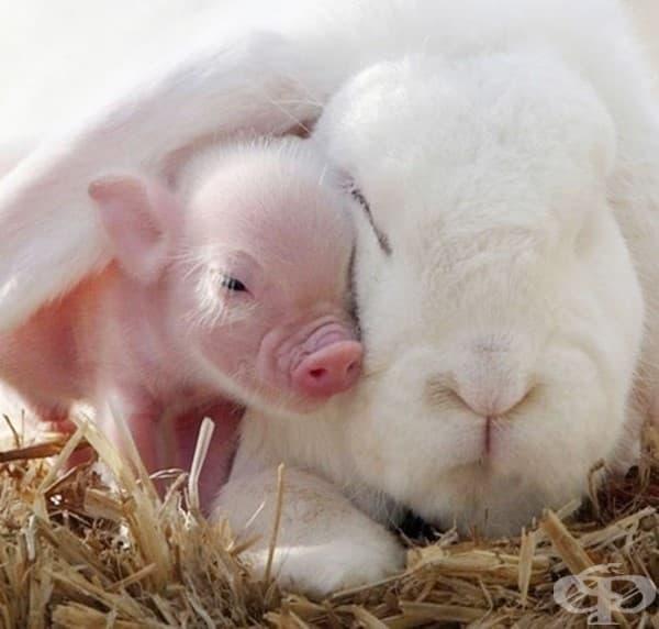 Заек и прасенце