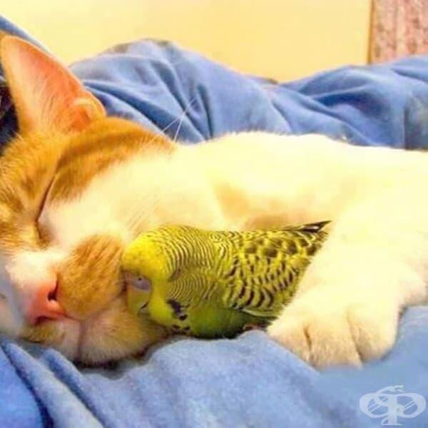 Котка и папагал