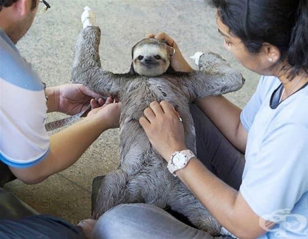 20 животни, които обожават да ги галите по коремчето