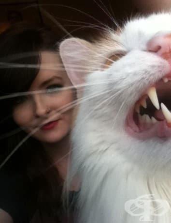 25 пъти, в които котки не желаят да участват в глупавите селфита на човеците си