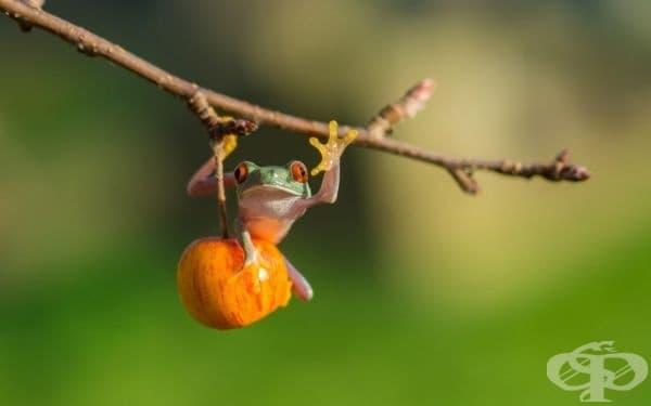 Още една жаба (фотограф: Kutub Uddin).