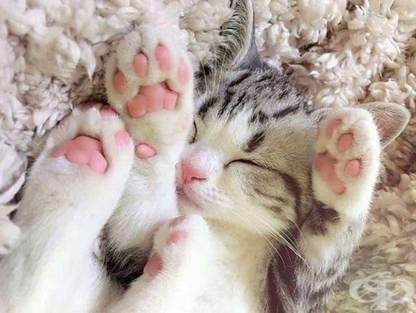 Колко добре спи и няма намерение да се пробужда.