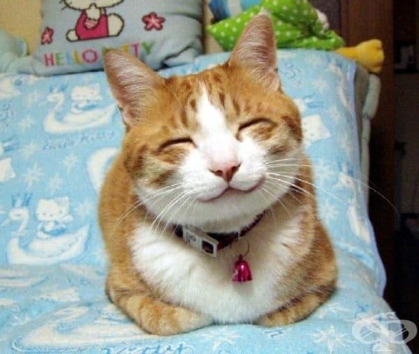 Истинска чеширска усмивка