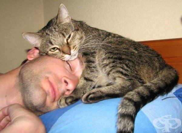 С топлина: тялото на котката обикновено е с няколко градуса по-високо от човешкото, така че котките оказват затоплящ и противовъзпалителен ефект.