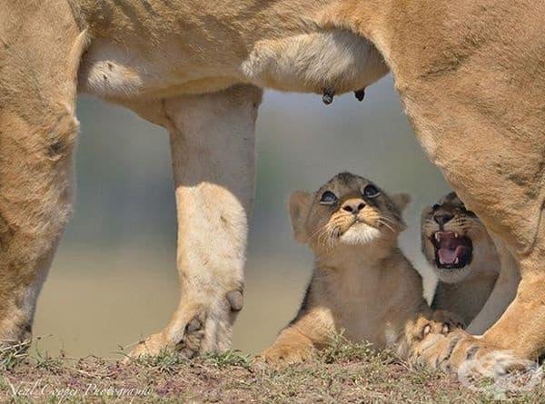 Защото майките са силни!