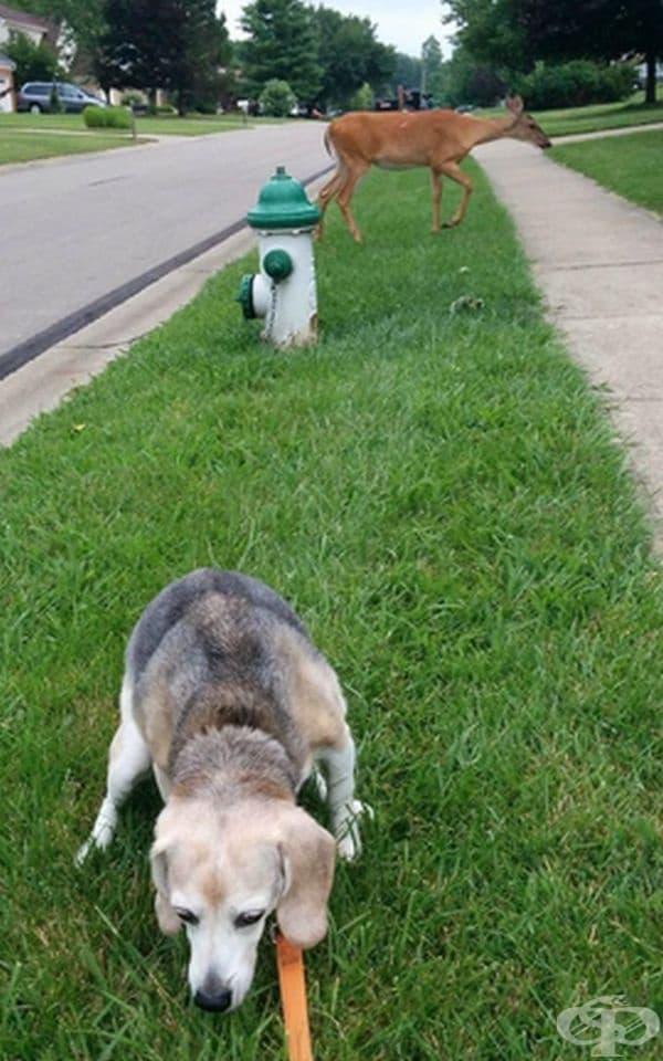 """""""Моето ловно куче винаги е нащрек""""."""