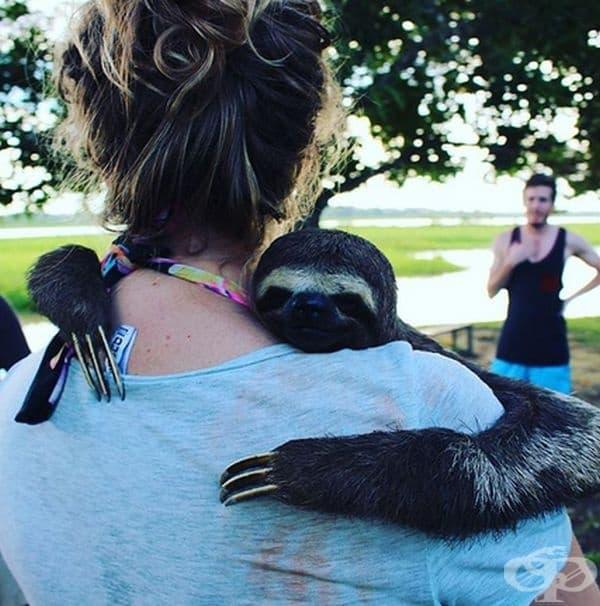 Ленивците също обичат прегръдките.