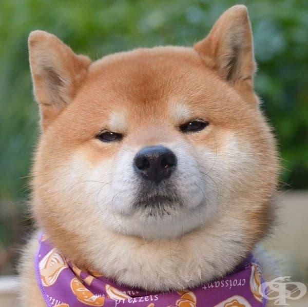 Все още не се наслаждавате на всеки ден? Това куче е разочаровано от вас.