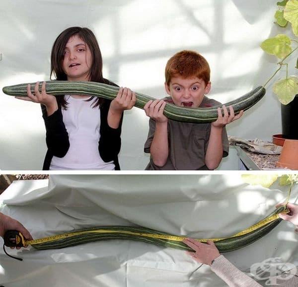 Хейзъл и Джейми, чиято баба е отгледала 119-сантиметрова краставица. Бабата е възнамерявала да регистрира рекордния зеленчук, но той е изгнил преди специалистите да могат да го измерят.